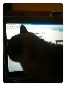 Felino al computer
